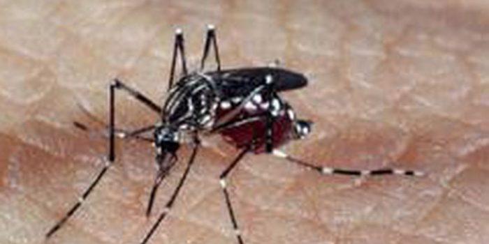 DF tem 31 mortes por dengue; casos suspeitos passam de 31 mil